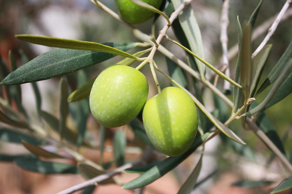 Olio di Oliva: dal frutto all'olio.