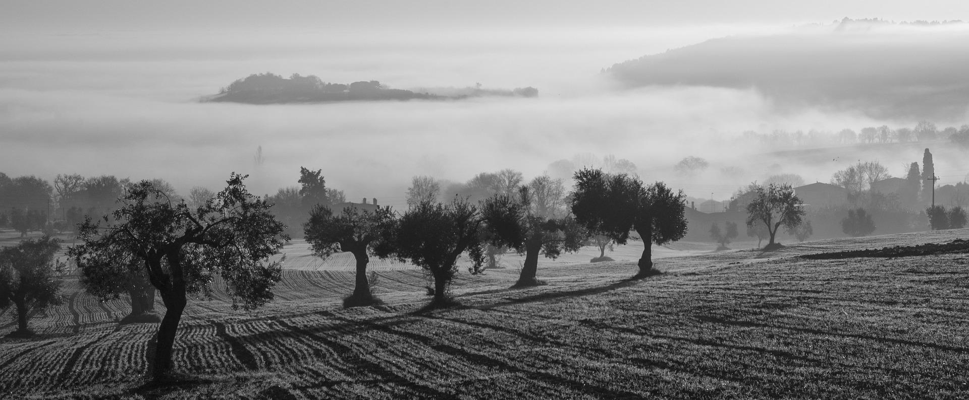 La nascita dell'albero di ulivo: la leggenda greca.